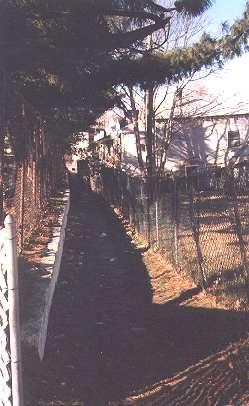 Alleys_sheepshead_01