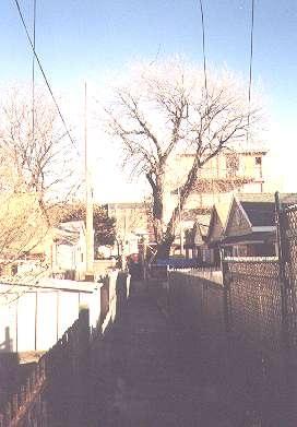Alleys_sheepshead_06