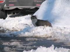 06-browvale-cat_