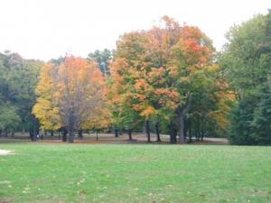 38-golden-park_