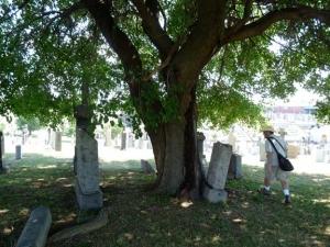 35-deathtree