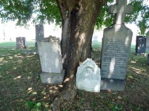 37-deathtree