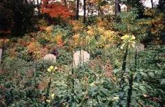 cemeteries_ichabodsleepshere_10