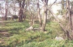 cemeteries_ichabodsleepshere_16