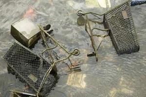 41-franklynch-carts_