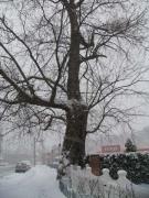 06-lnp_-tree_