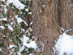 07-lnp_-tree_