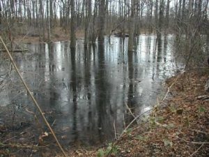 simarinersswamp
