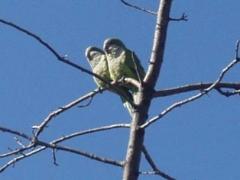 parrot1_0