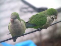 parrots023