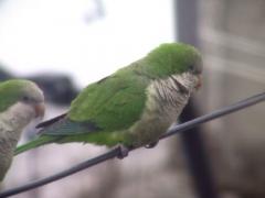 parrots024