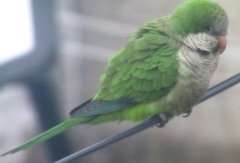 parrots028