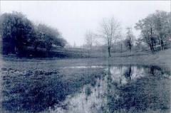 pond-3-copy