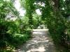 willow-pl1_