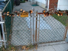 68-lyndhurst-fence_