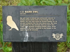 31-swindler-barnowl