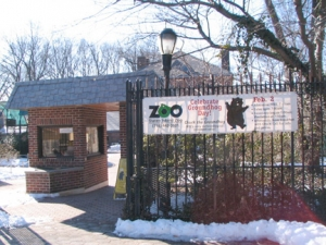 10-zoo_-groundhog
