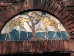 49-giraffes