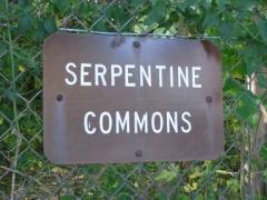 49-serpentine