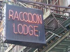 12-raccoon