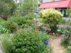 116-gardens1