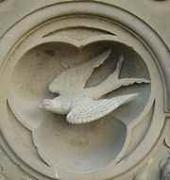 terraceswallow