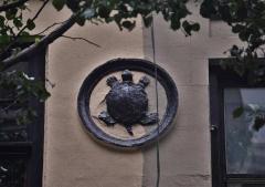 BM.turtle