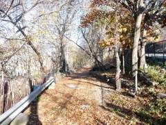 61-uni_-woods_