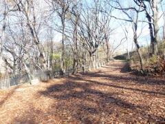 63-uni_-woods_