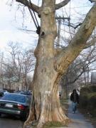vand-ave_-tree_