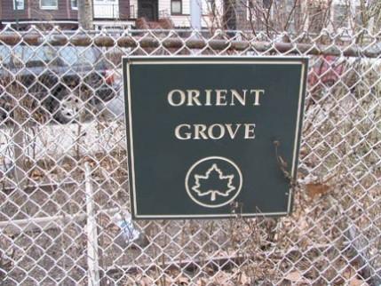 31.orient.grove