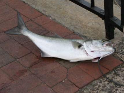 13.fish