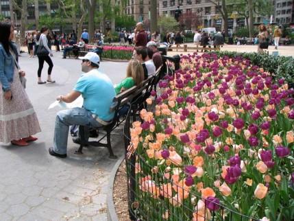 06.madison.tulips