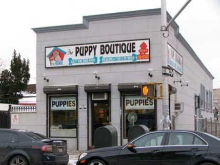 10.puppy.boutique