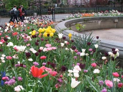 48.tulips