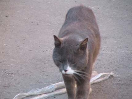10.watchcat