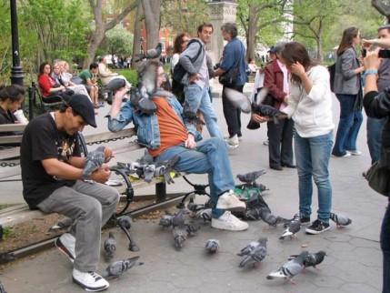 104.birdman