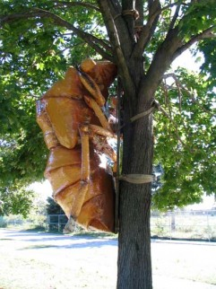 08.cicada