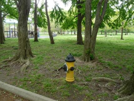 12.hydrant
