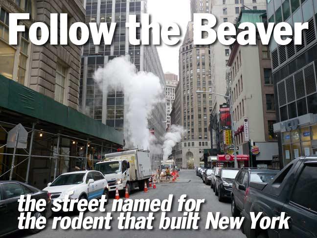 title.beaver
