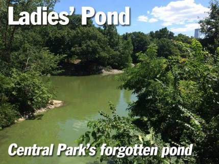 title.ladies-pond